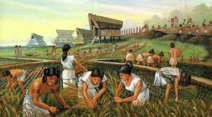 жители Древнего Китая собирают рис